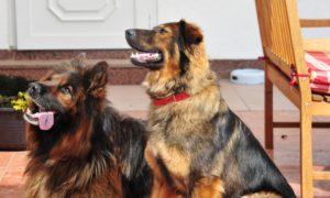Quintus & Hera