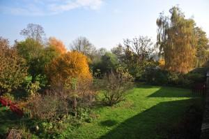 Wiese & Garten