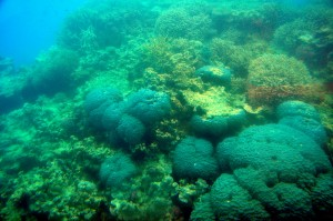 2011.10_Australien_Great Barrier Reef, QL_7