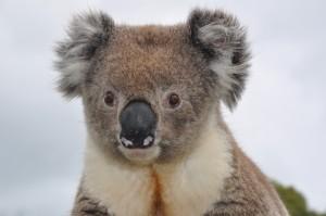 2011.10_Australien_NSW