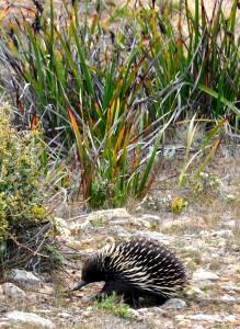 2011.10_Australien_NSW_1