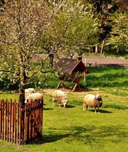 Schafe von nebenan